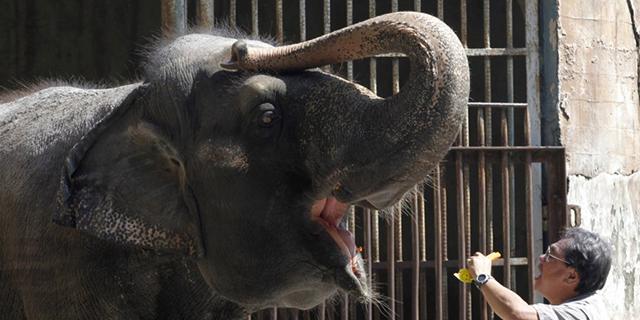 Pietų Korėjoje gyvena kalbantis dramblys