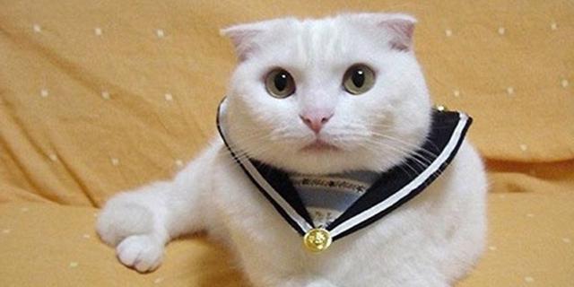 Internete – kačių mados namai
