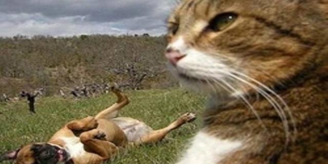 Gyvūnijos pasaulyje taip pat egzistuoja genijai?