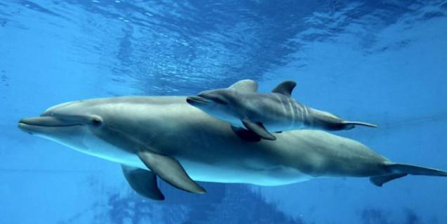 Delfino švilpimas kompiuteriu tiesiogiai išverstas į žmonių kalbą