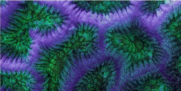 Siekdamas išgelbėti koralus, mokslininkas sukūrė vaizdo klipą apie magišką jų pasaulį